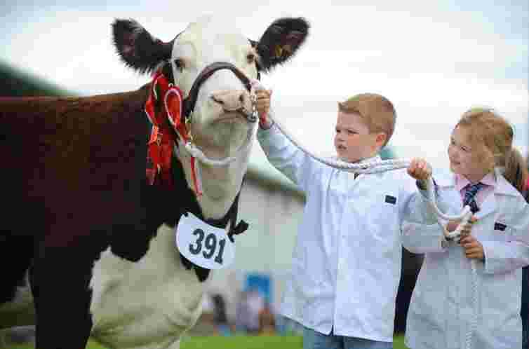 Highland Show Edinburgh, children, cow, showing