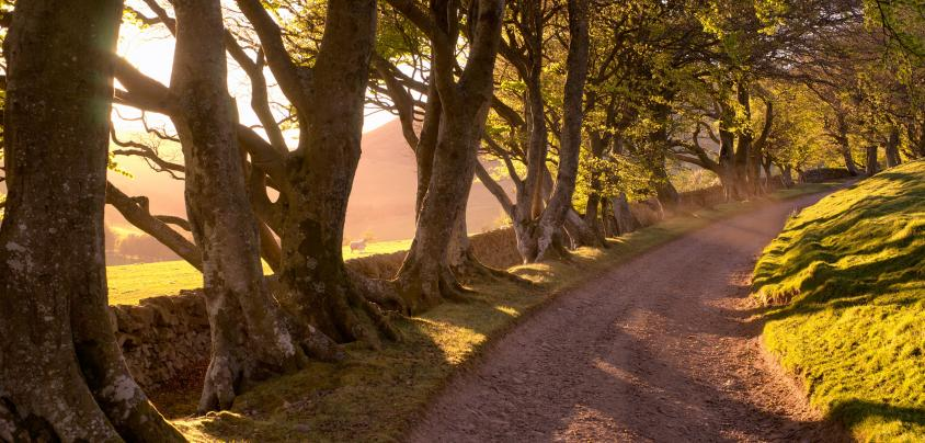 farm track with light filtering through the trees, beech trees, track in the Pentland Hills near Edinburgh, Pentland Hills Regional Park, Pentland walks and hiking