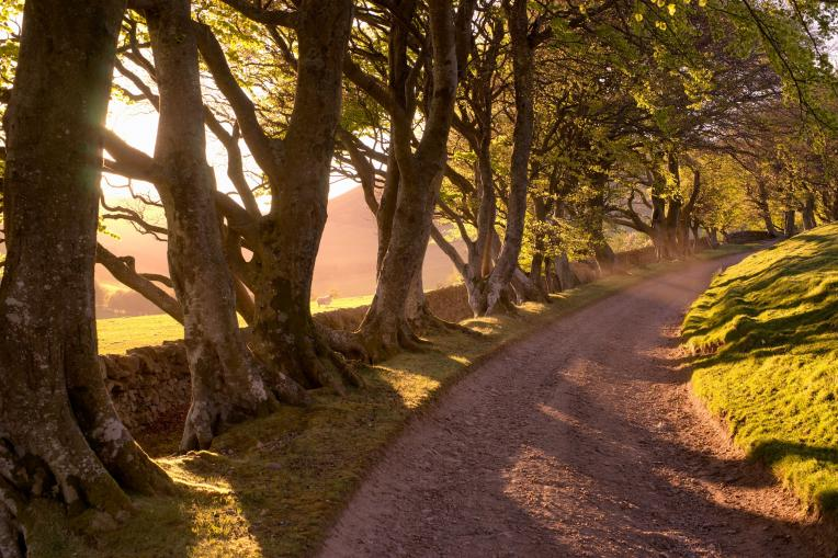tree lined farm track in summer with light streaming through the branches, beech trees, eastside farm track, holiday cottages, scottish summer, Pentland Hills